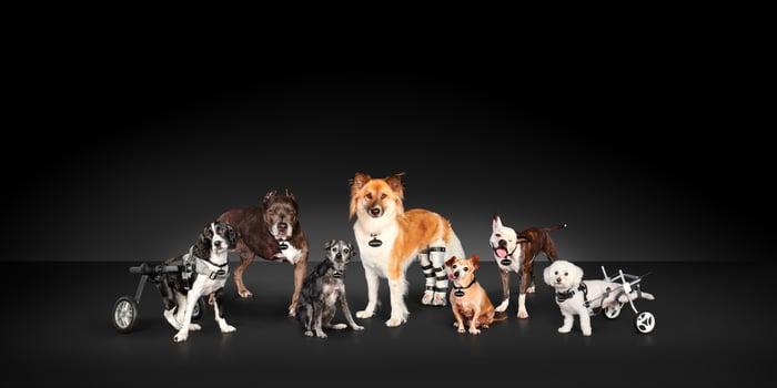 subaru-national-make-a-dogs-day-credit-subaru